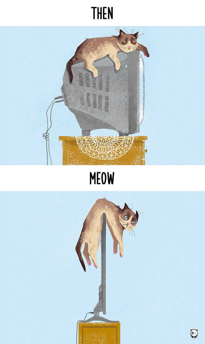 viata pisici pe televizor inainte si acum datorita tehnologiei