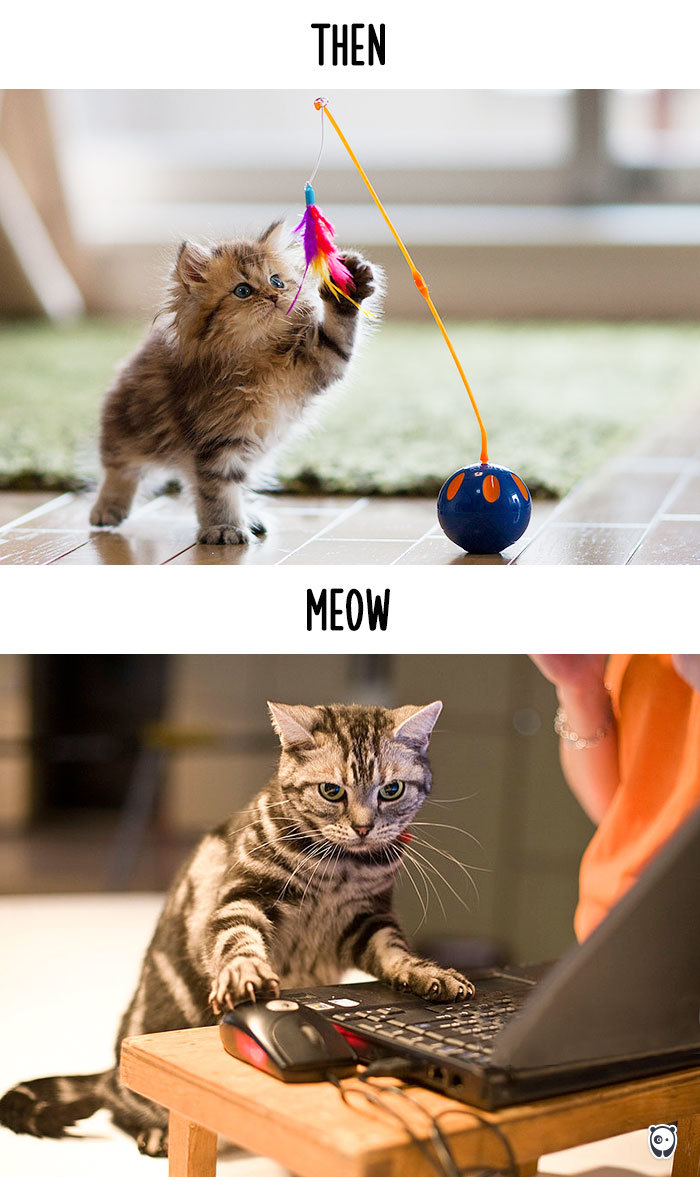 cats-then-now-funny-technology-change-life-3-5715fa427ed08__700